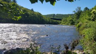 Naugatuck River Scene in Summer