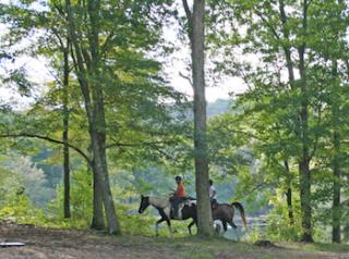 Matthies Park Horses